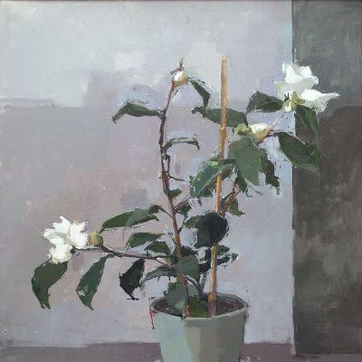 Sarah Spackman-January Camellia-54x44cm